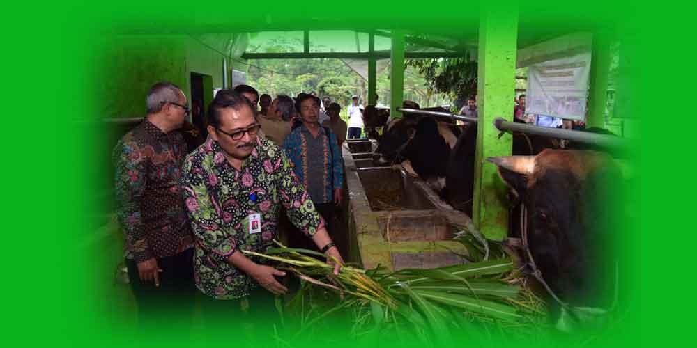 bantuan sapi desa